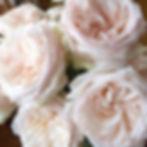 white oahara.jpg