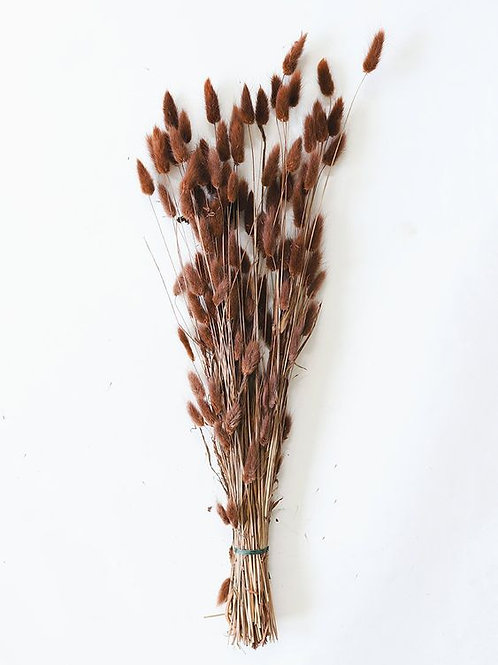 Dried Bunny Tail - Brown