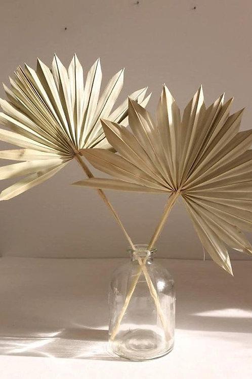 Sun Palm -Natural