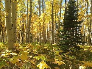 Sunny autumn day, photo by Cara Stiles