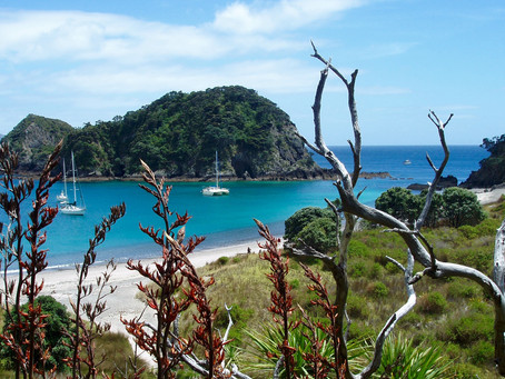 Bay of Islands | The best things to see and do 👀 👍