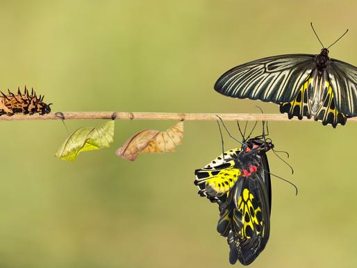 8 Strategies to Avoid Transformation Failures