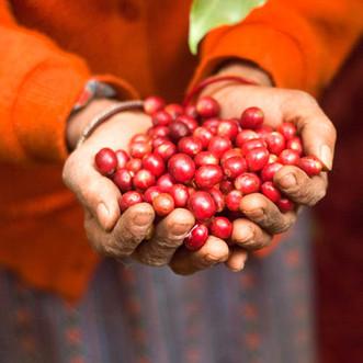 村人の暮らしを支える美味コーヒー