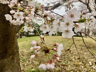 【4月マルシェ開催休止のお知らせ】
