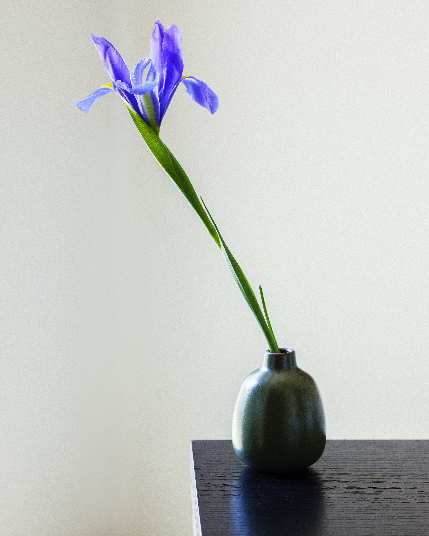 Precarious Balance Iris