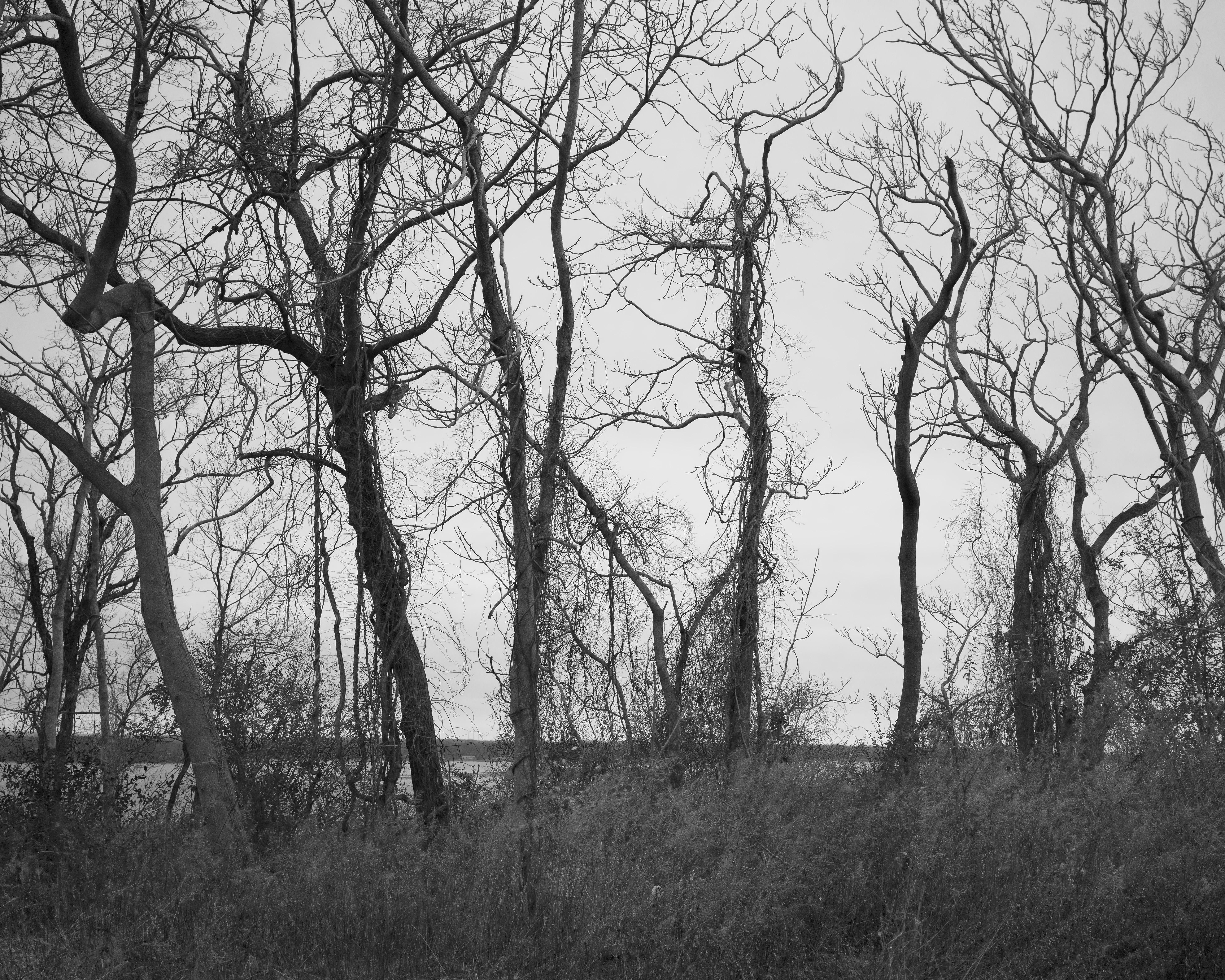 Long Island Trees