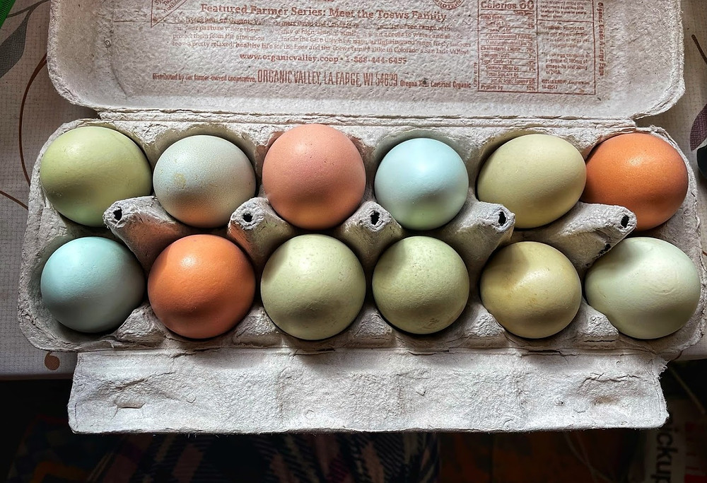 A dozen multi-colored eggs from Koofie's Natural Living Farm & Botanicals in Libertytown, MD