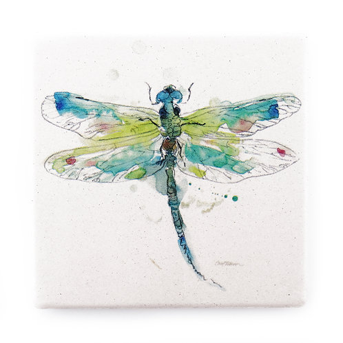 Coaster Dragonfly