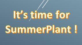 summerplant.JPG
