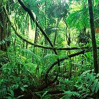 выездной квест - тайна джунглей.jpg