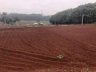 Soil in Hainan.jpg