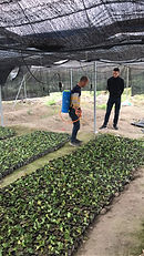 Rescue seedlings.JPG