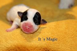 Its Magic!