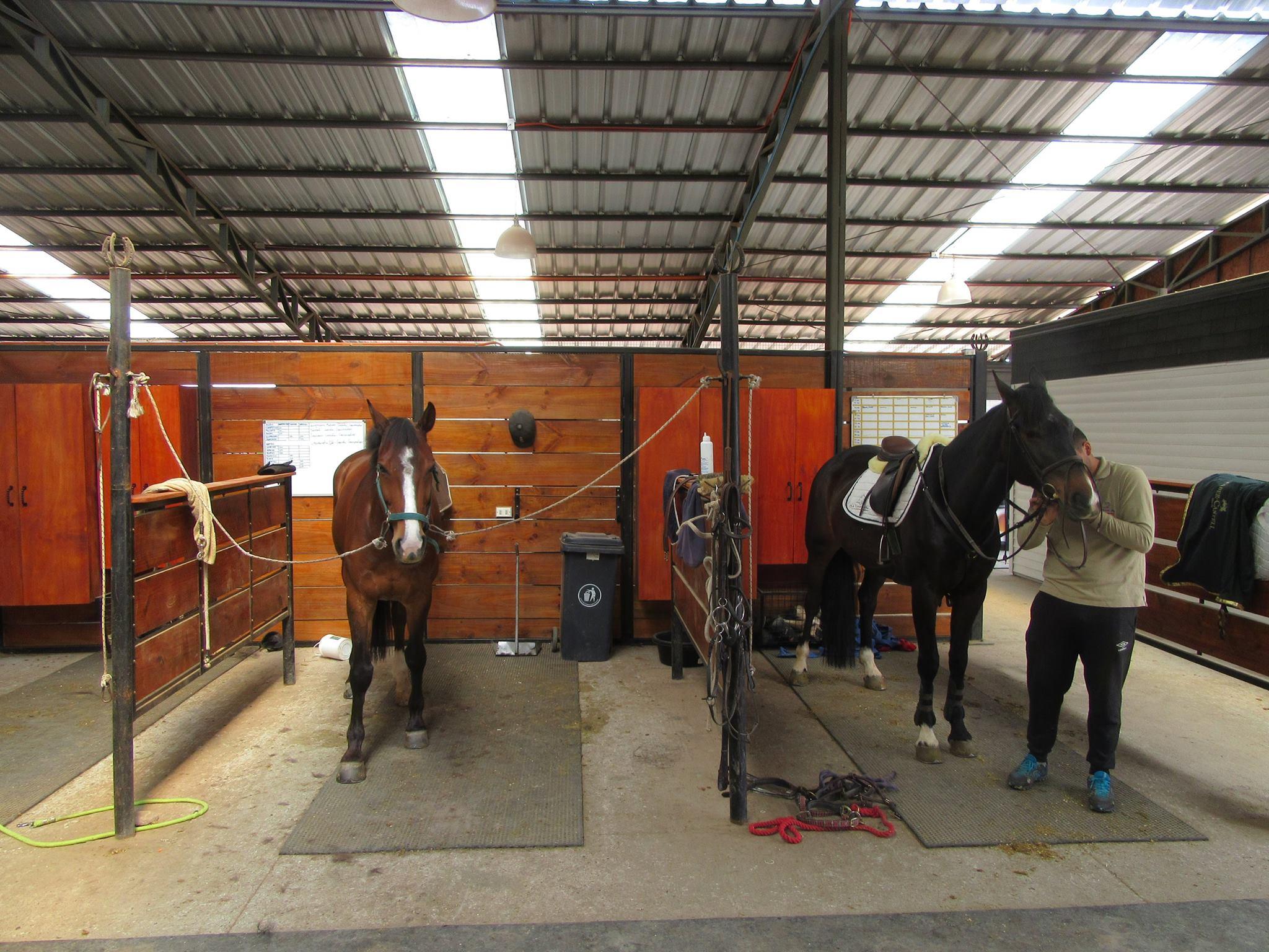 Ensilladeros preparando caballos