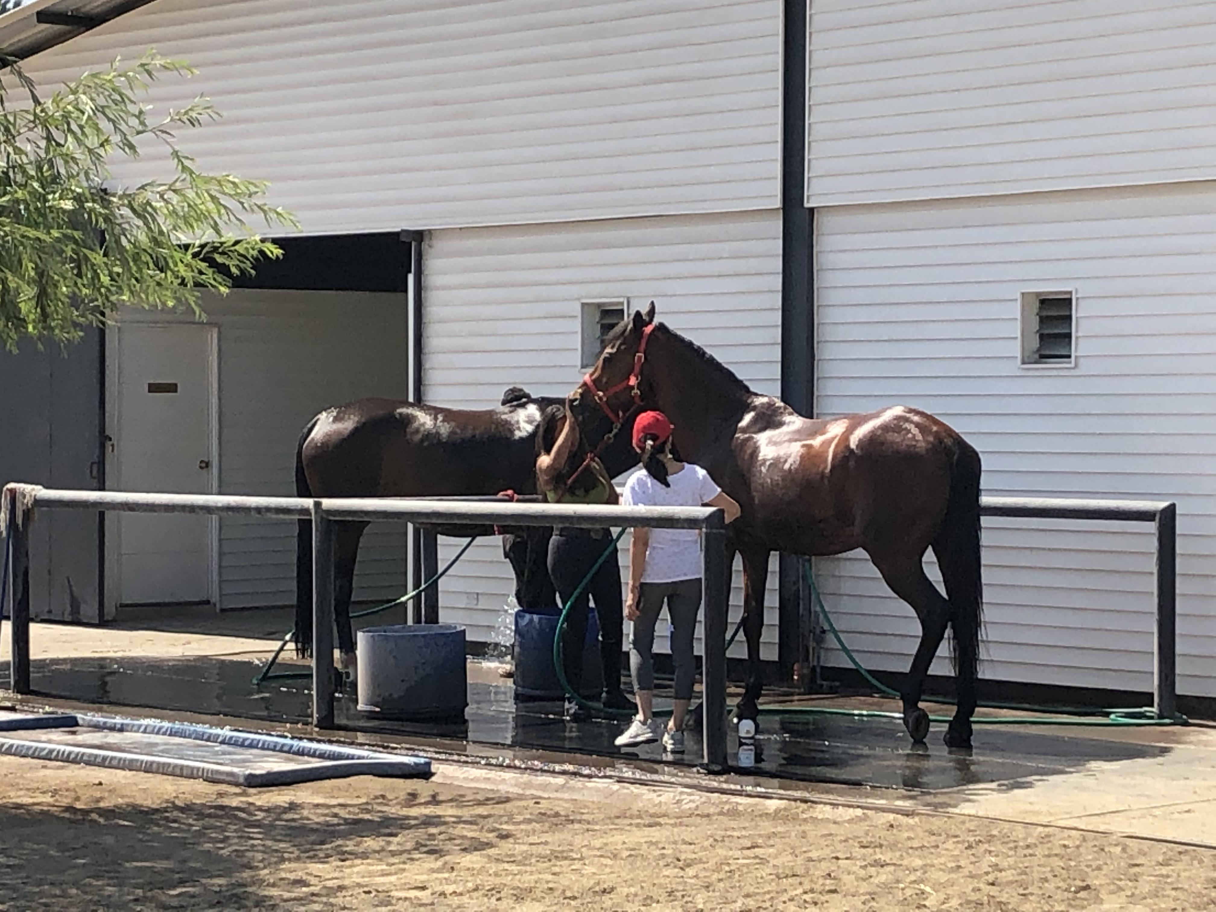Duchas para los caballos