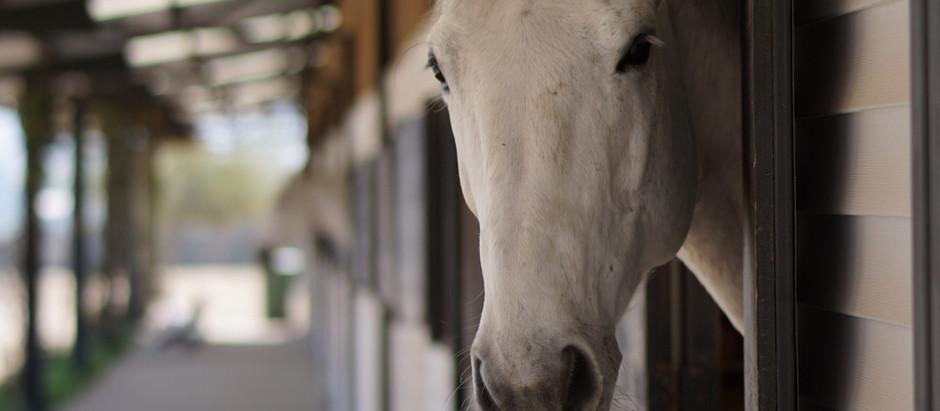 Los 10 principios de la etología para tener una buena relación con tu caballo