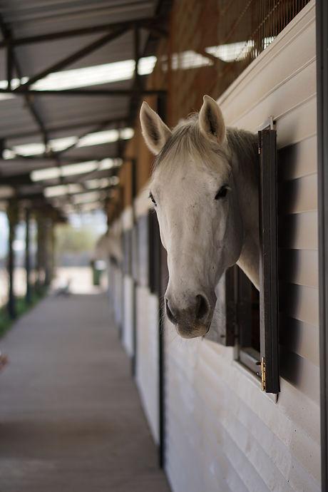 Equitacion Chile www.clublacandelaria.com