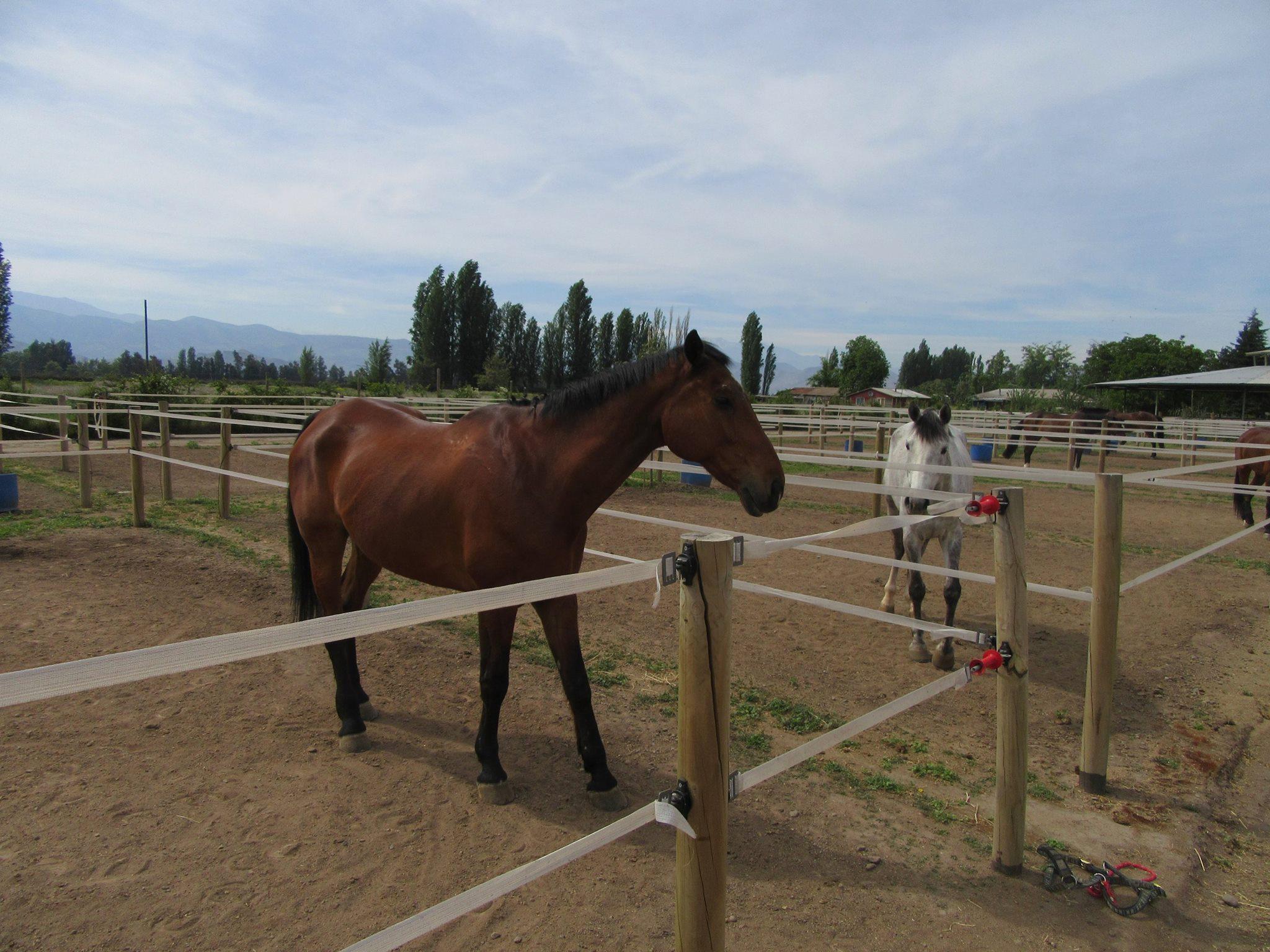 Corrales caballos descansando