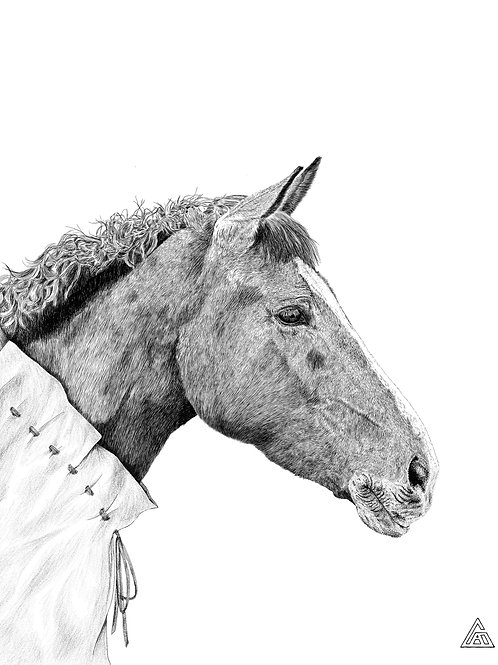 Horse in a Tunic Print