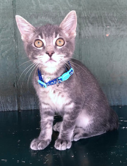 4680 Chips (Male DSH)