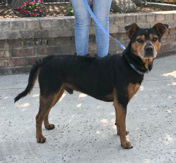 8910 Reeses (Male Terrier Mix)