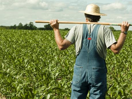 Книга фермера
