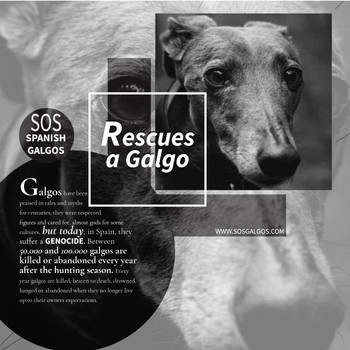 Rescues a Galgo