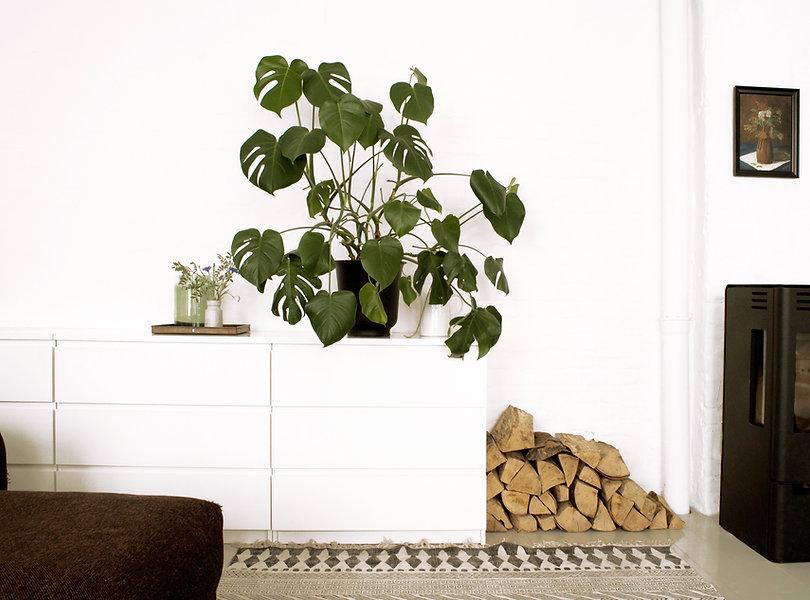 raini-peters-interior-design-and styling