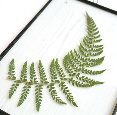 curved fern 3.png