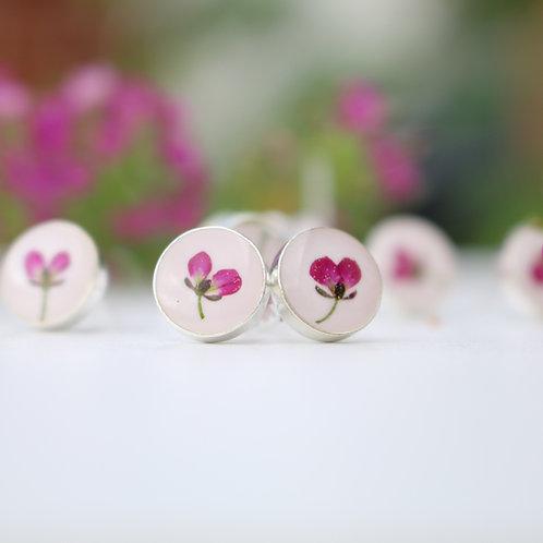 Sterling silver stud earrings with real purple Alyssum flowers