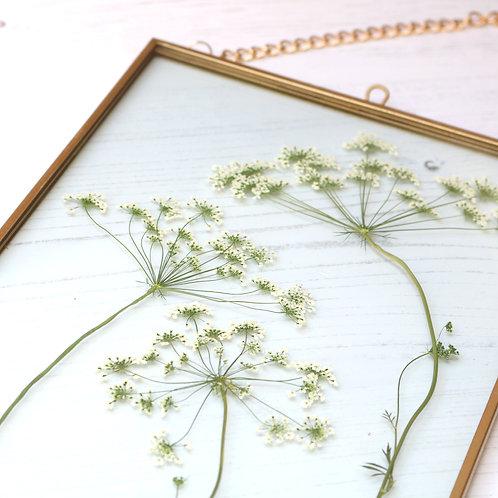Real ammi majus flower glass botanical art with gold frame