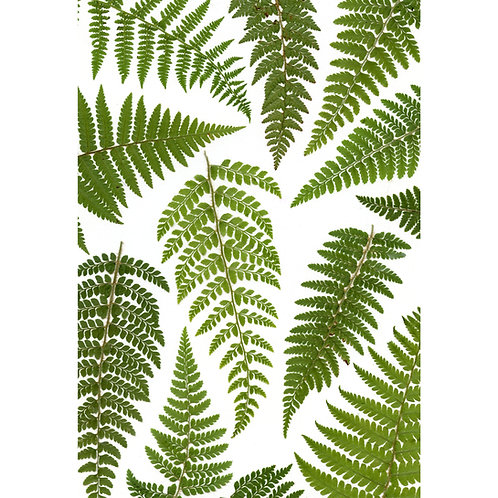 A4 giclee print of real pressed green fern leaves, botanical floral wall art