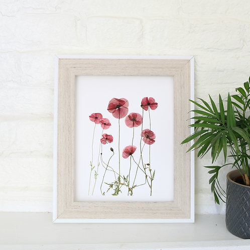 A4 giclee print of real pressed red poppies, botanical floral wall art