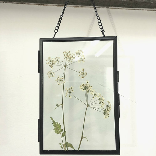 Real cow parsley glass botanical art with black frame