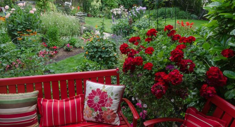 red geraniums.jpg