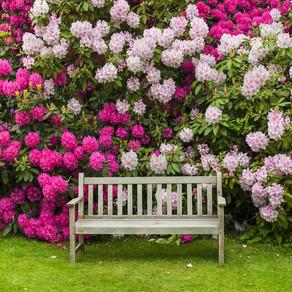 Blooming Shrubs for Georgia Gardens