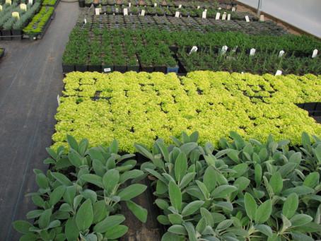 All about Perennials