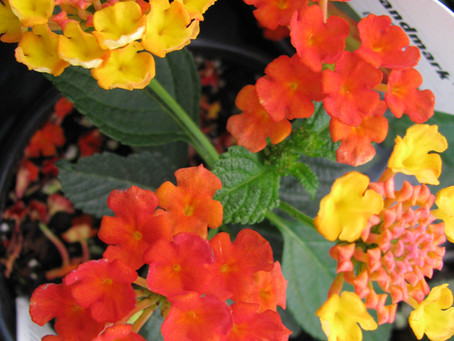 All about Annuals