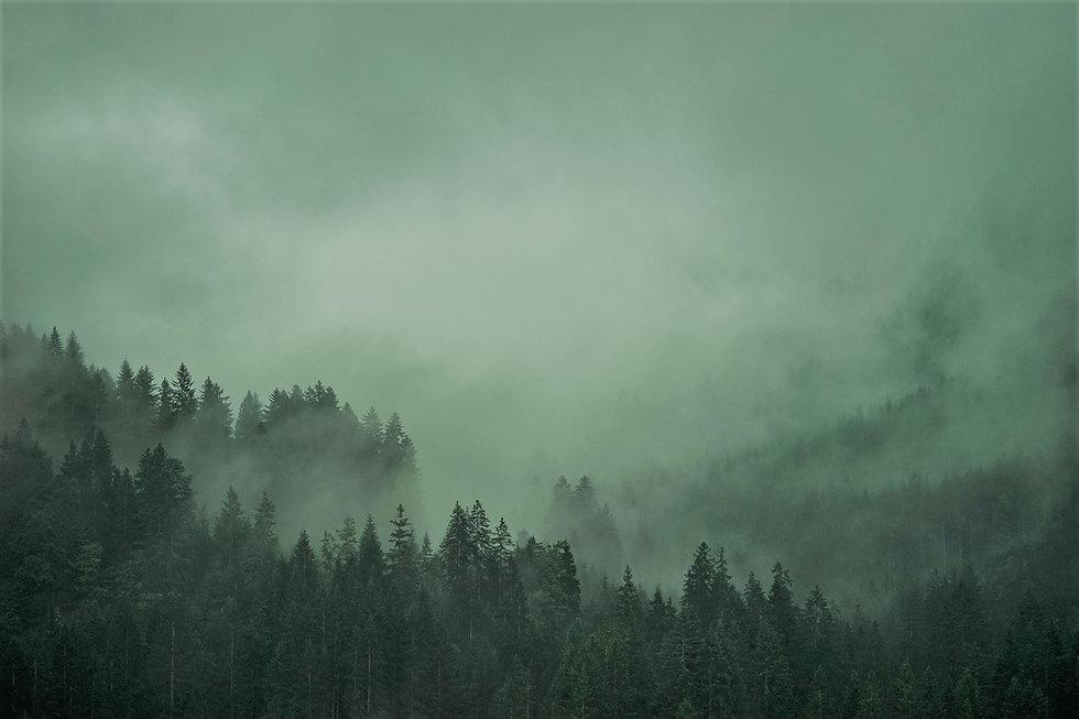 forest-6524635_1920.jpg