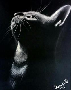 gato-_conté_blanco