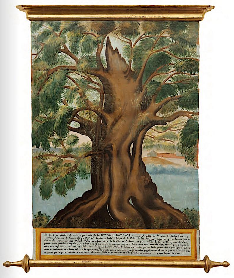 Cartela de árbol gigante