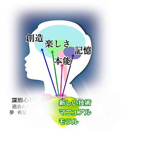心と脳8.png