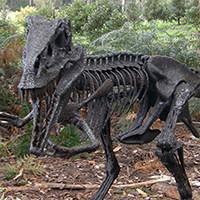 James Hanslow - Raptor