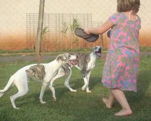Socialização cães e crianças no Canil BSC - A IMPORTANCIA DE SOCIALIZAR O FILHOTE