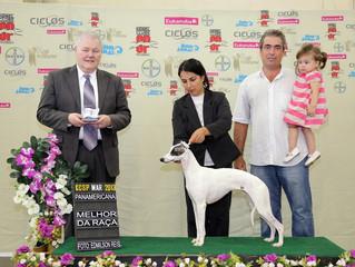 #1 da raça no Brasil em 2012