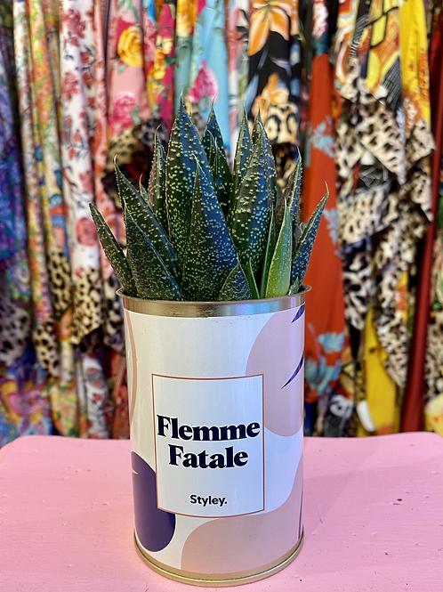 PLANTE CACTÉE en CANETTE «FEMME FATALE»