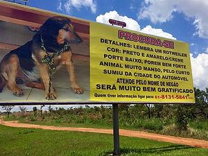 Dono contrata detetive e outdoor para achar 'cão que lembra rottweiler'
