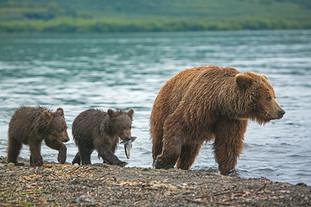 קמצ׳טקה - חצי האי הפראי של רוסיה , 12 יום