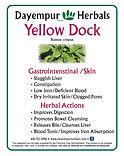 Yellow Dock .jpg