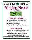 Stinging Nettle.jpg